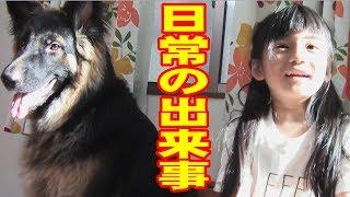 秋田犬惣右介は食いしん坊ですね 体は小粒ですが、とにかくジャーマンシ...