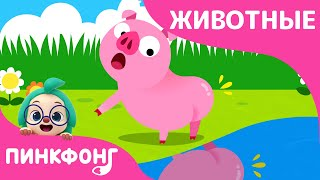 Видел Кто-нибудь Мой Хвост? | Песни про Животных | Пинкфонг Песни для Детей