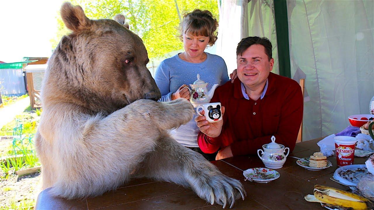 Risultati immagini per bear pet