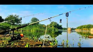 Охота на Дикого Речного САЗАНА рыбалка с Ночёвкой на РЕКЕ