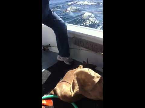 Big Sur Deep Sea Fishing Trip
