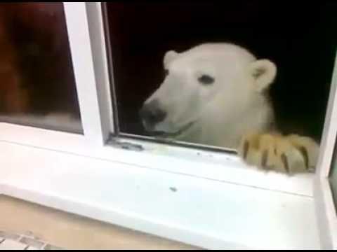 фото книги красной белый медведь из