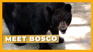 Meet Bosco: Suffering Inside a Concrete Pit for Two Decades