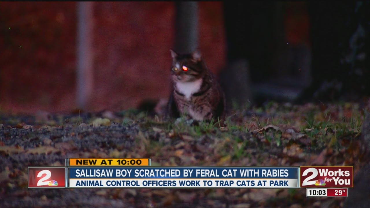 tabby cat scientific name