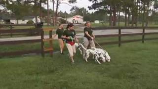 Dog Training - 101 Dalmatians The Musical