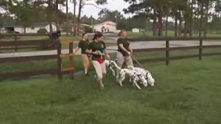 Dog Training - 101 Dalmatians The Musical