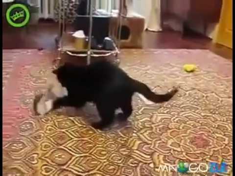 знакомство горностай