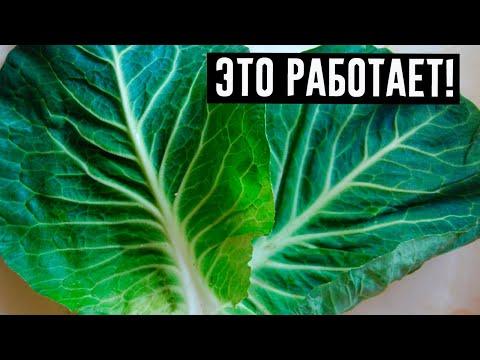 Женщина каждый день клала листья капусты в свой лифчик. Многие уже используют этот метод!