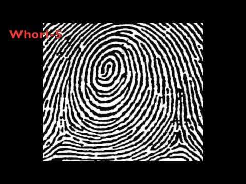 Fingerprints EG,BM,JG,DA