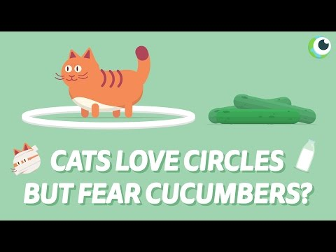 CATS VS CUCUMBERS VS CIRCLES