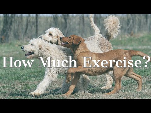Puppy Play and Exercise