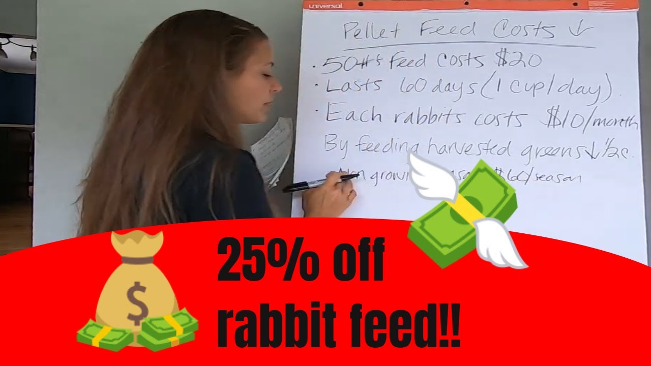 Reduce rabbit feed bill by 25% by doing this