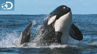 À la chasse aux dauphins : Le Mois des Requins