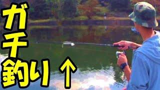 前半~霞ヶ浦バス釣りアングラーKOH-と千代田湖ボートバス釣り初挑戦!...