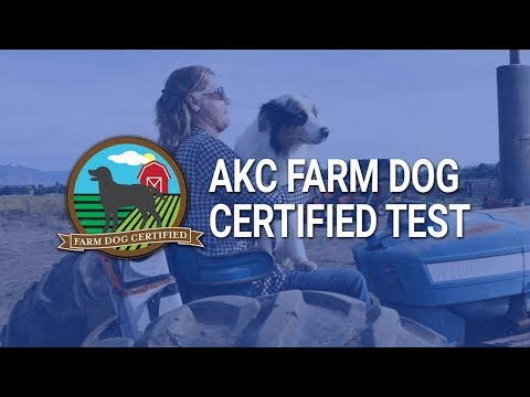 AKC Farm Dog Certified Test