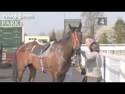 How To Spot A Winning Horse