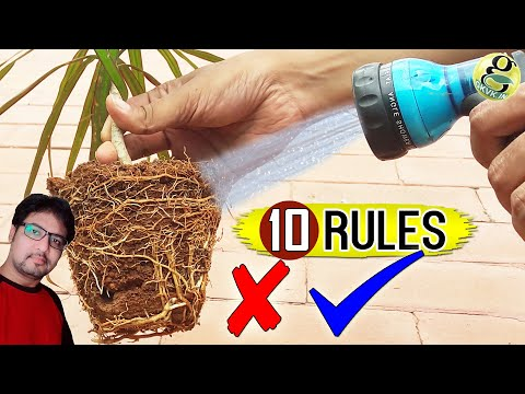 10 GOLDEN RULES of WATERING Plants Correctly | How to water a plant & How Often?