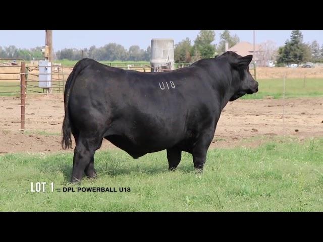 Dal Porto Livestock and Rancho Casino Lot 1