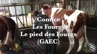 Lavage des vaches au pied des Fourgs