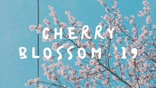 Yeouido Cherry Blossom Festiva…
