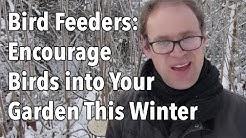 Bird Feeders: Encourage Birds into Your Garden This Winter