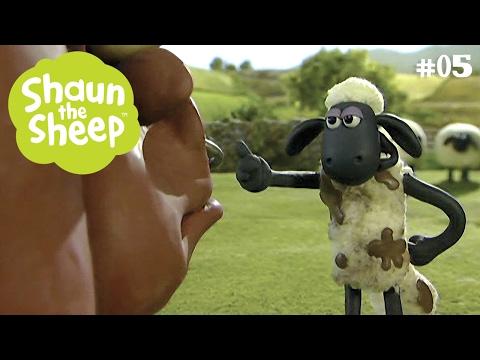 Dấu bò tót - Những Chú Cừu Thông Minh