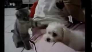 Кошки против собак Прикол! Юмор! Прикол! Смех