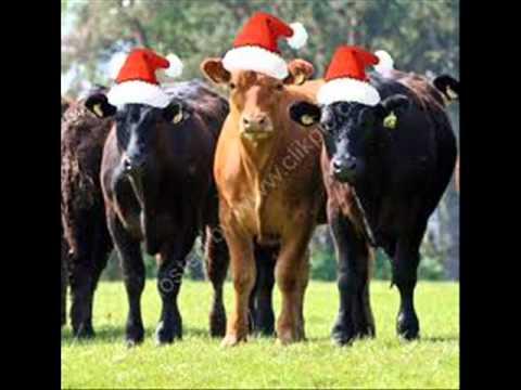 Christmas Cow.Merry Cow Christmas