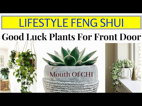 Lifestyle Feng Shui Good Luck Plants For Front Door Lucky Plant For Main Entrance Mouth Of Chi Youtube