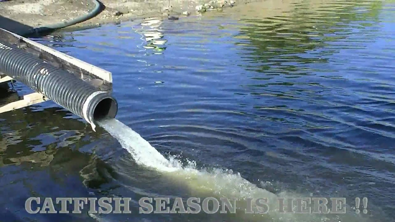 Corona lake trout stocking part 1 of 2 youtube for Corona lake fishing