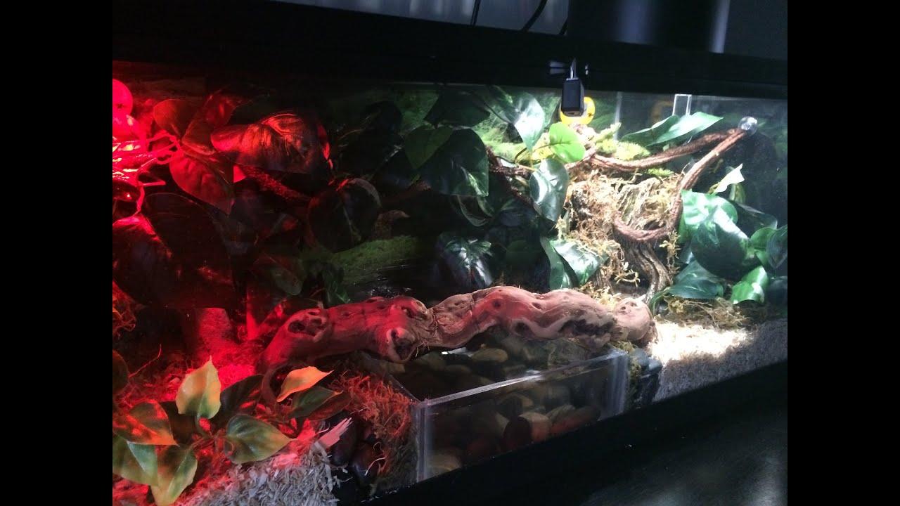 (Ball Python Enclosure) - YouTube & Awesome Snake Tank!!!!(Ball Python Enclosure) - YouTube