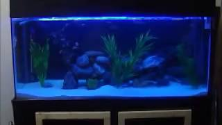 Diy 100gal Cichlid Aquarium (design And Build-up) 1 Of 3