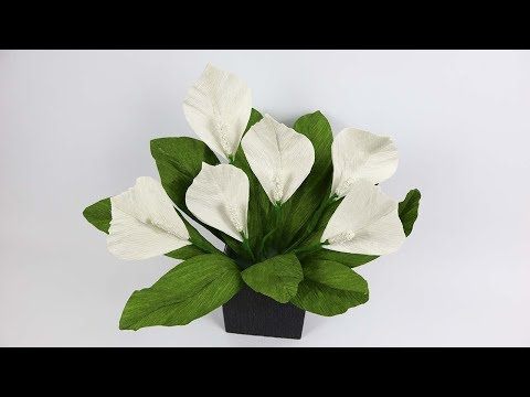 DIY Peace Lily Paper Flowers | How To Make Peace Lily Paper Flowers From Crepe Paper