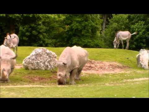 [New Project] Ma visite au zoo de Beauval [1/2]