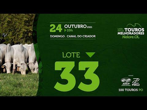 LOTE 33 - LEILÃO VIRTUAL DE TOUROS MELHORADORES  - NELORE OL - PO 202