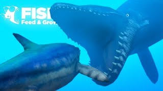 Download lagu EATING THE BIGGEST CARNIVORES IN THE OCEAN!! - Fish Feed Grow   19