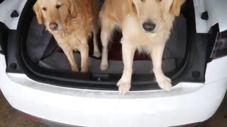 Fitting two dogs in Tesla model S