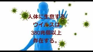 人体の常在ウイルスは380兆個以上存在する。:多くは細菌に感染するバクテリアファージですが、すべての生物の機能と進化に関わっており、免疫に関係する各種ウイルスも多く存在する。1