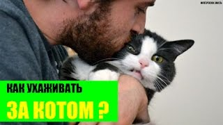 Как ухаживать за котом?