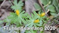 Frühlingsanfang 2020 - Frühlingsbeginn - Frühlingstagundnachtgleiche - Erster Frühlingstag