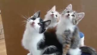Cutest Cats   - Best Cute Cat Videos Ever  - Reverse video