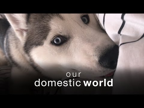 Our Domestic World: Migrations & The Bedroom | The Pet Collective