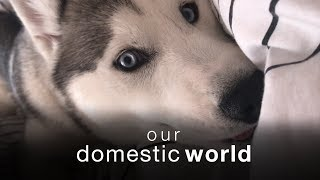 Our Domestic World: Migrations & The Bedroom