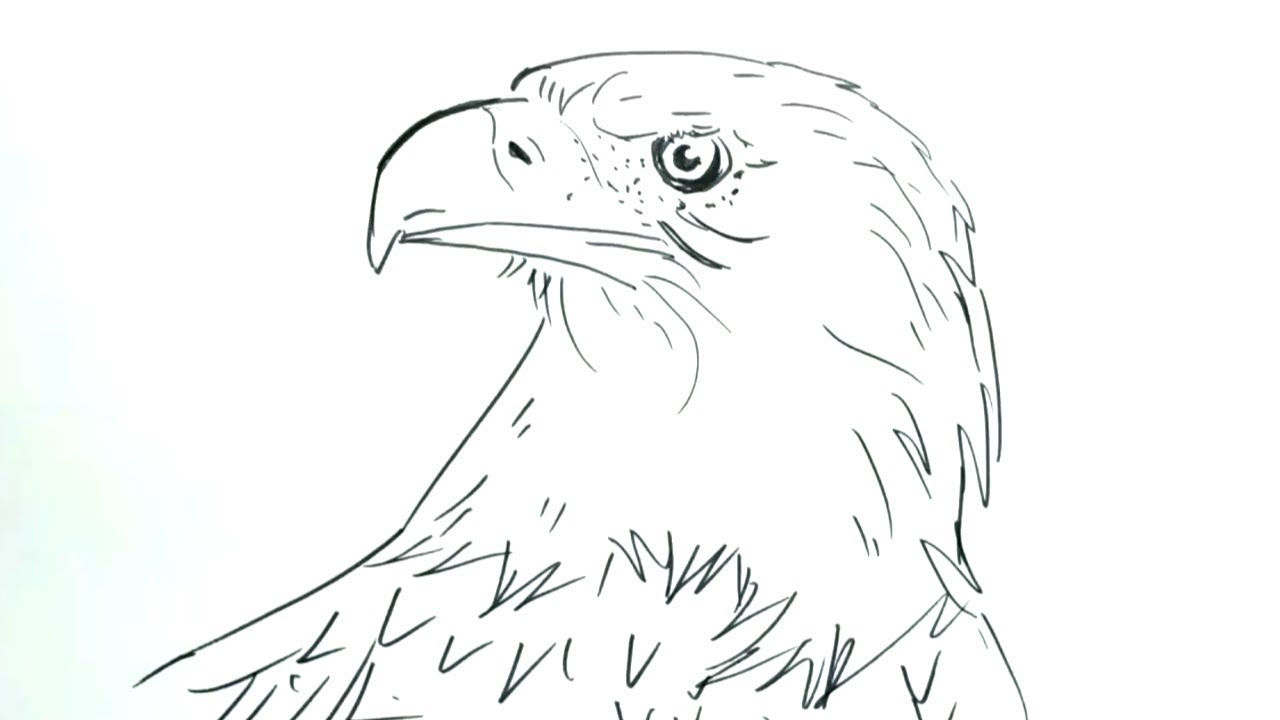 1000 Gambar Burung Garuda Pensil HD Paling Baru Infobaru