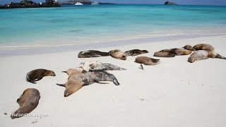 Fukushima Losing Battle, Marine Mammals Dying, Radiation SPIKES update 5/18/14