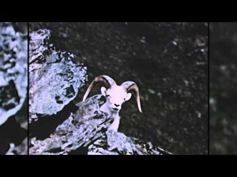 Eastmans' Hunting TV - Alaska Sheep/Caribou - Outdoor Channel