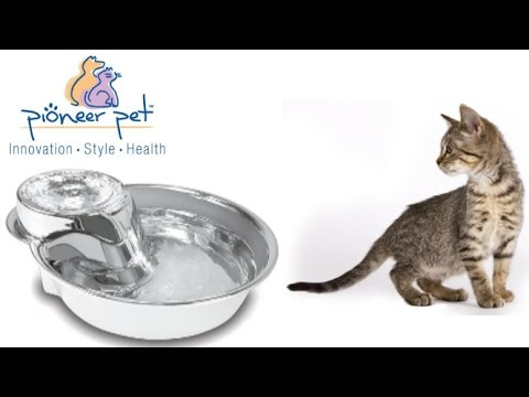 Big Max Drinking Fountain from Pioneer Pet