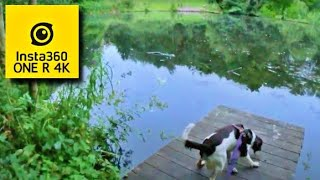 My 1 Year Old Puppy Springer Spaniel 5am Dog Walk (Boarshaw Clough) / insta360 ONE R 4K