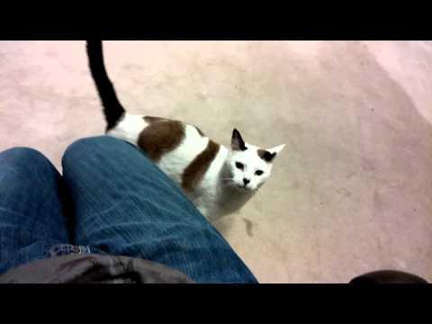 My cat jumping on my lap