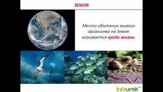 Среды жизни планеты земля. Видео №1